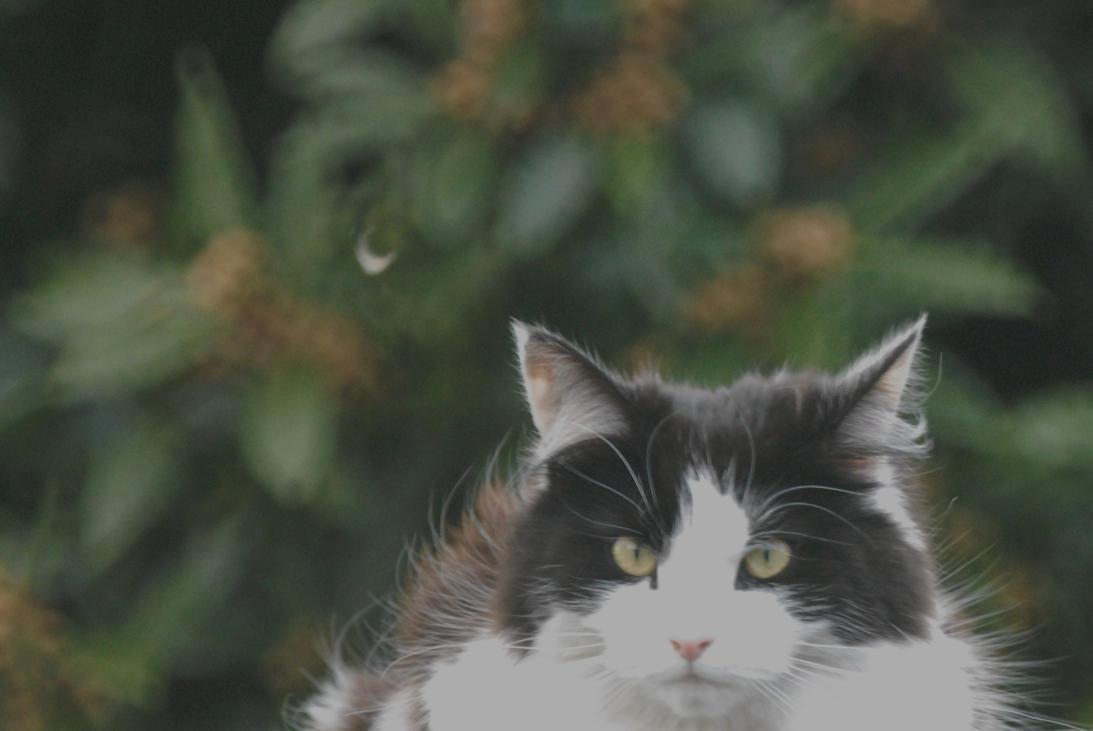 Feline by Meluzina81