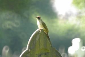 Green Woodpecker by Meluzina81