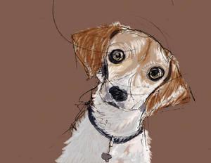 Squiggleh Dog