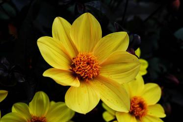 Flower in the Sun by RoWsA