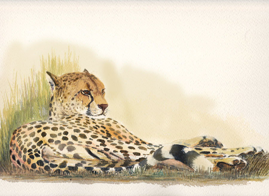 Persian Cheetah by Leogon