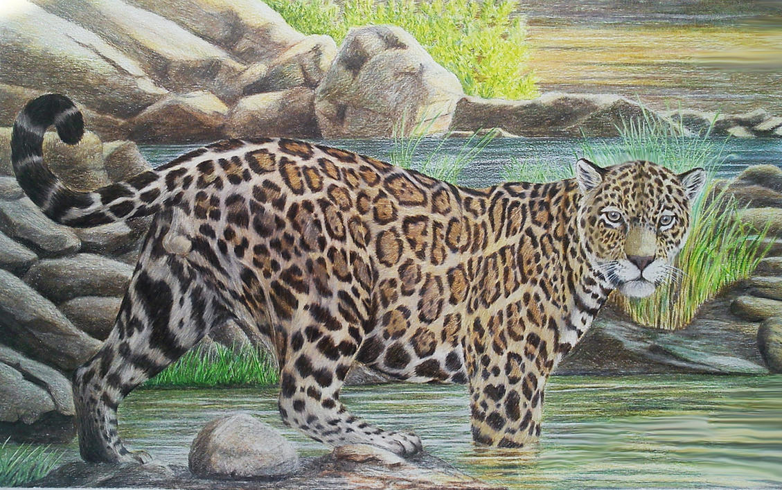 Jaguar by Leogon