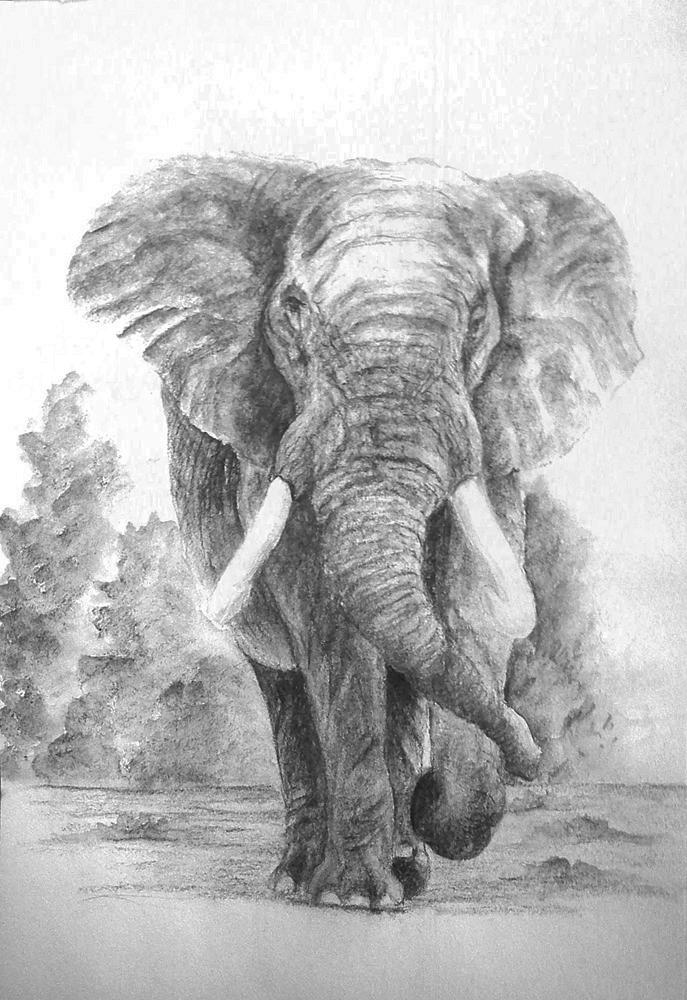 Elephants drawing
