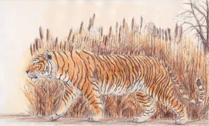 Caspain tiger