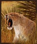 Smilodon populator:The portrait of a predator