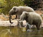 Dwarf mammoths