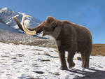 Woolly Mammoth : Spring is on the way...