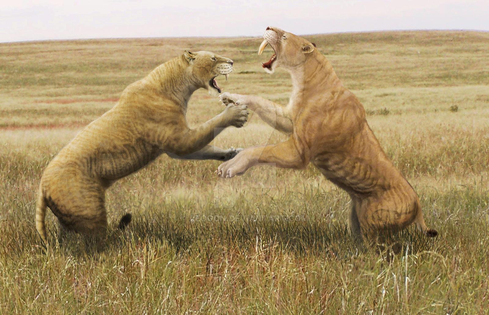 American lion vs Smilodon populator by Leogon on DeviantArt