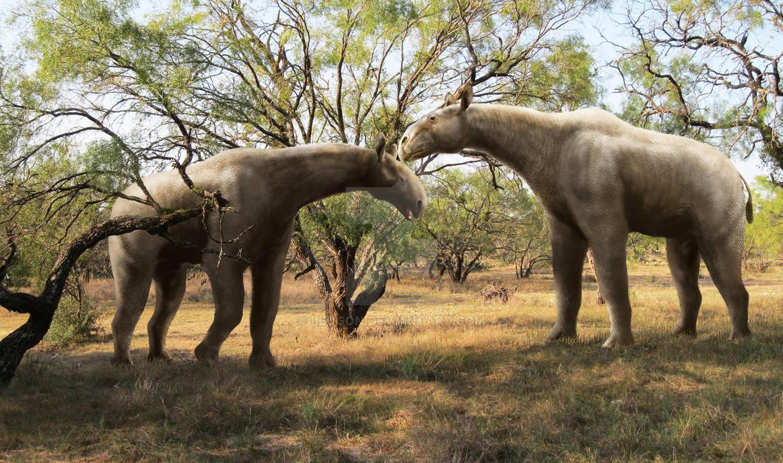 Paraceratherium by Leogon on DeviantArt