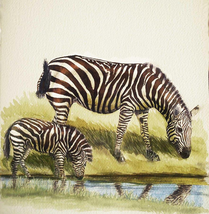 Zebras by Leogon
