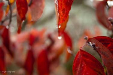Red Drops by highkingluke