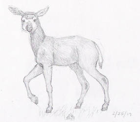 White Tailed Deer by kohaku-of-the-horses