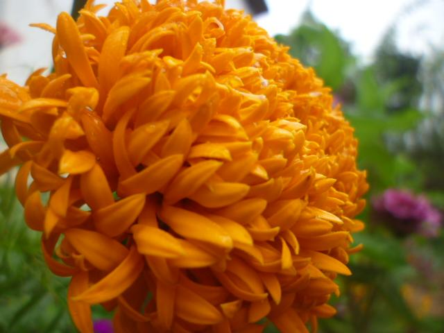 Flowers by DeTIX