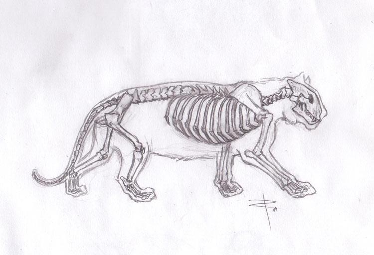 Evidence For Evolution Frisky Felines