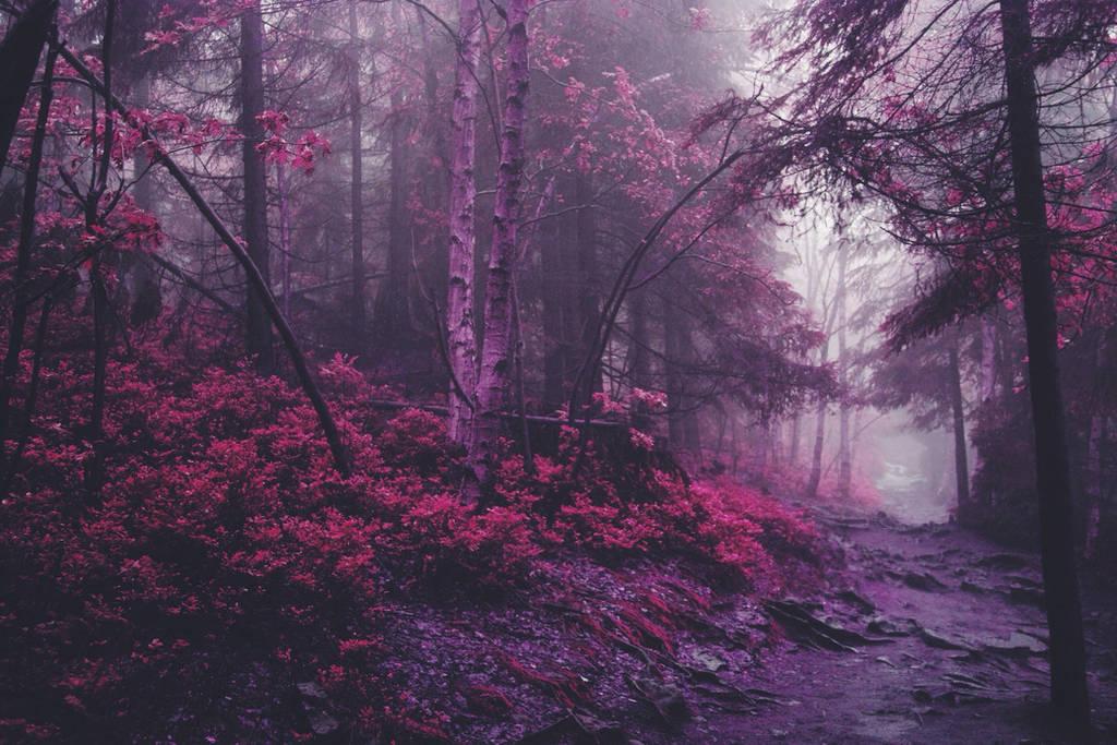mystical forest by NeroManka