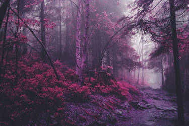 mystical forest by NeroManka