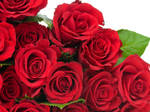 Red roses of Love