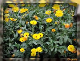 Tiny yellow flowers by gayatri23119