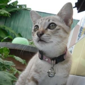 Zeno-bia's Profile Picture