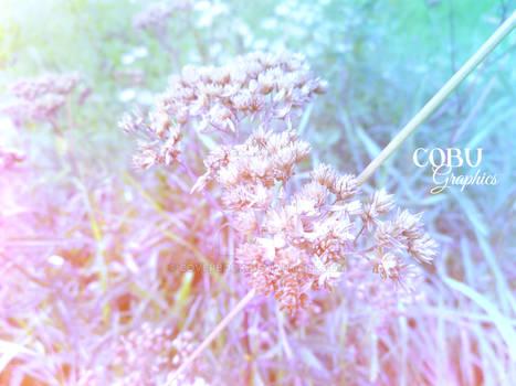 Colorsplash - COBU GRAPHICS