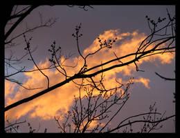 Orange Cloud Series V by thegratefulred