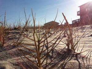 Sand Dune Grass Forest 2