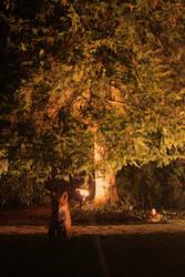 Fox under tree