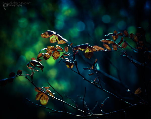 Magic in Bokeh by LiveArtBreatheArt