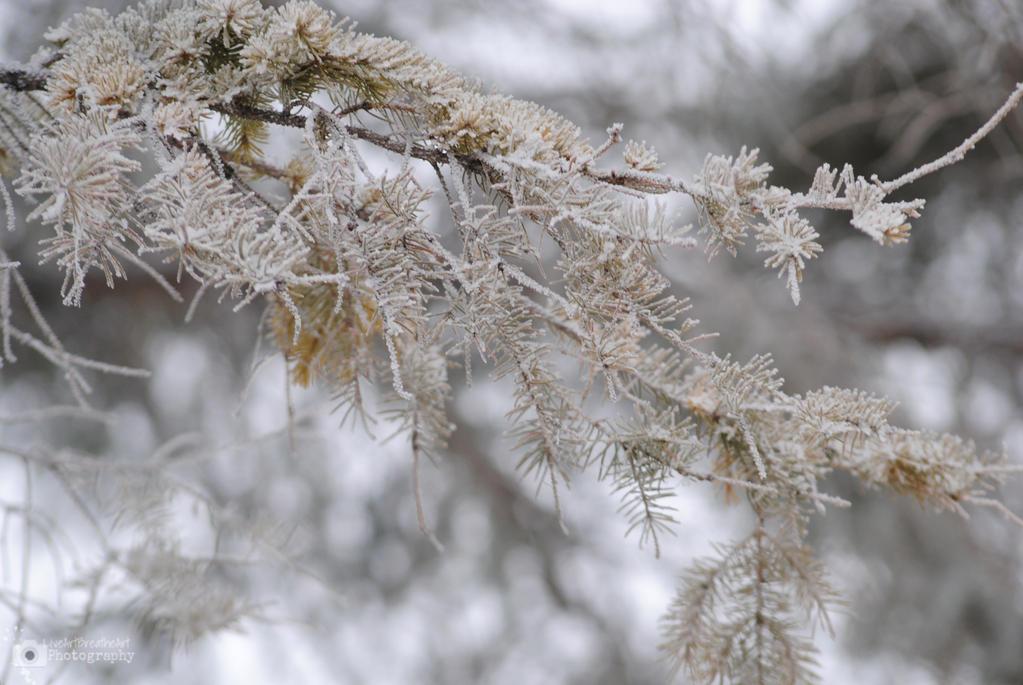 Frozen by LiveArtBreatheArt