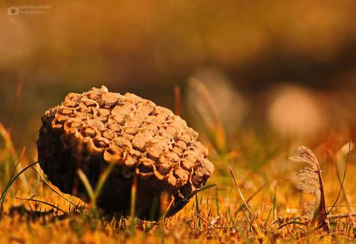 Bee My Honeycomb