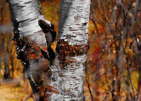 Autumn Visits Spring