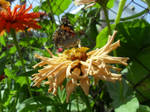 Butterfly and flower 2