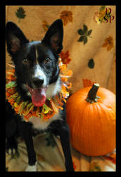 Fall Harvest by Dakota-Spirit