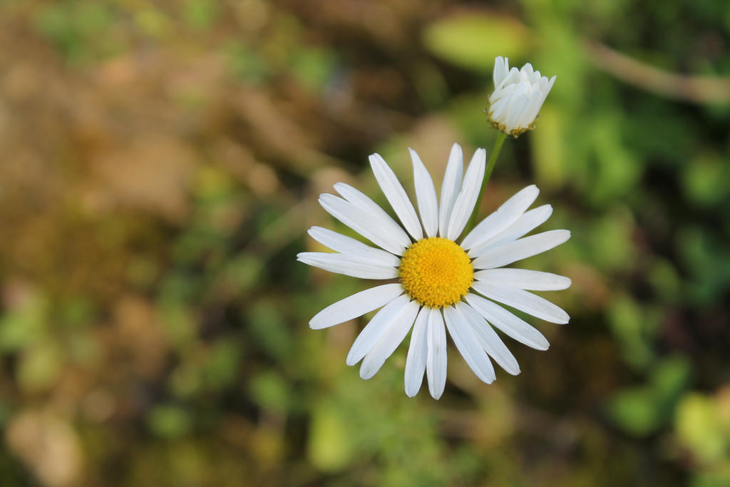wild flover by DreamerSK