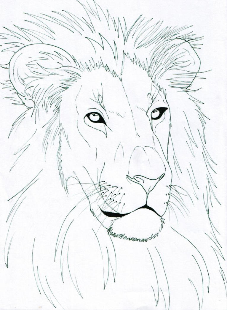 Line Drawing Lion Face : Simple lion head line drawing