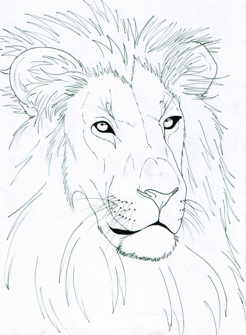 Line Drawing Lion : Lion head by lucy on deviantart