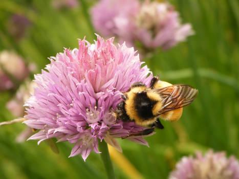 Bee 14