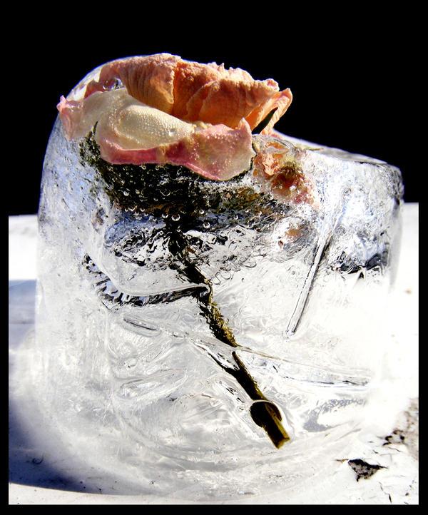 Ice... by Bl4ckR0se24