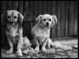 Old Friends by Bl4ckR0se24