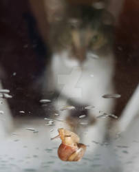 Kitty and Snail