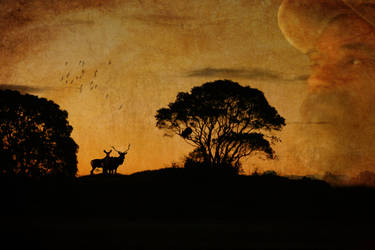 Silhouettes by allison712