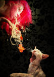 If You Give A Cat A Wish