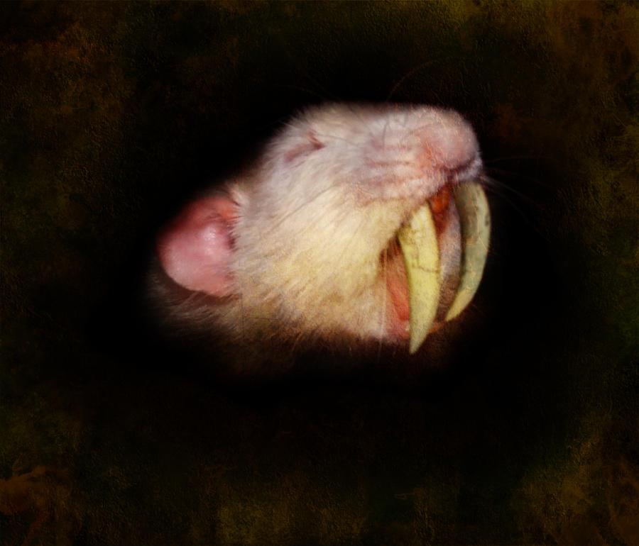 Sabertooth Rat