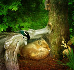 Let Sleeping Foxes Lie