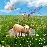 Pigs Need Love Too