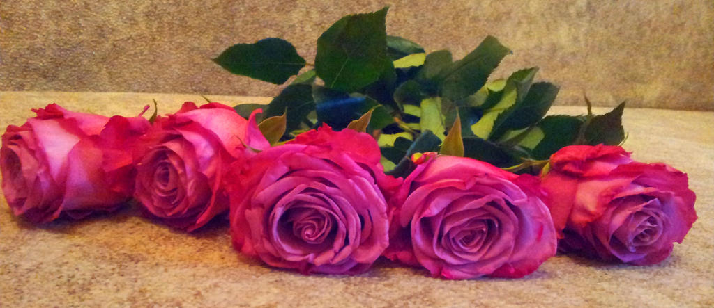 Pink Roses by Kit2000andAnna