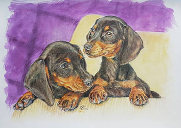 Dachshund Puppies by Harmony1965
