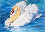 World Watercolor Month - Day 7 (White Swan)