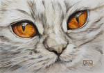 World Watercolor Month - Day 10 (Golden-eyed Cat)