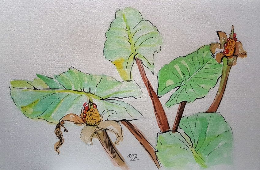 Leaves and flowers - sketch by Harmony1965
